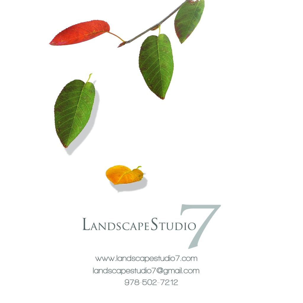 Graphic design zach beaulieu landscape design for Arid garden design 7 little words